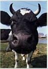 Marius van Leeuwen  -  Noord Holland - Postcard -  QC067-1
