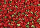 Letizia Volpi  -  Strawberries - Postcard -  QC158-1