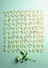 Letizia Volpi  -  For one hundred springs - Postcard -  QC199-1