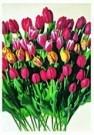 Paul Huf (1924-2002)  -  Flowerpower no. 8 - Postcard -  QC309-1