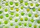 Paul Huf (1924-2002)  -  Flowerpower no. 35 - Postcard -  QC312-1