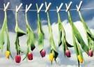 Martie Seesing  -  Knijpers met bloemen aan de waslijn, 2000 - Postcard -  QC438-1