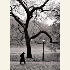R.A. Van Schaik/Central Park