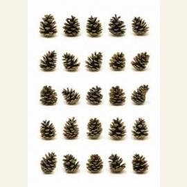 Portraits of pinecones