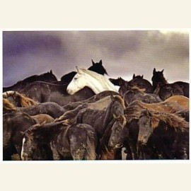 L. Aaij/Een kudde paarden