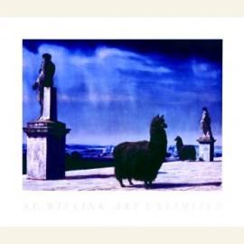 Lama's op terras