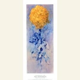 Mondriaan/ Chrysant      30*70