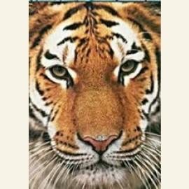 Siberische tijge